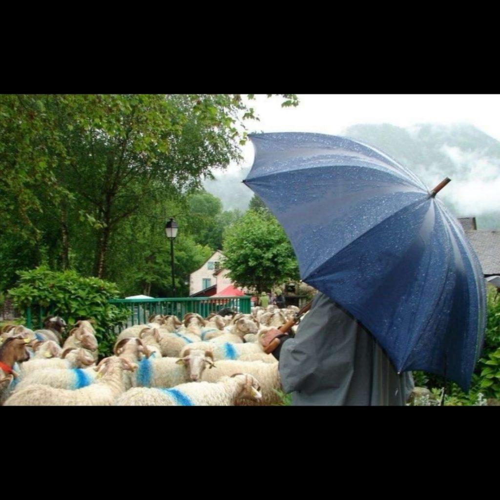 paraguas de pastor